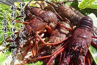 【幻の海鮮】濃厚なエビの味わい!幻の「伊豆伊勢エビ」宿泊プラン【料理自慢】
