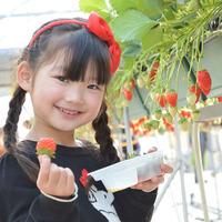 【イチゴ狩り体験チケット付】真っ赤なイチゴ50分食べ放題☆のどぐろ・島根牛〜美味しいものまるごと会席