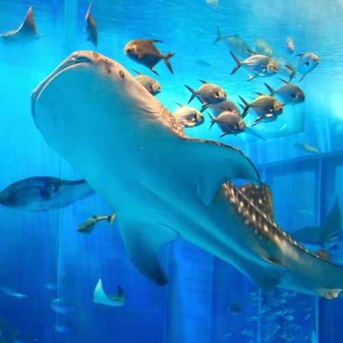 2連泊限定☆思い出づくりに♪「沖縄美ら海(ちゅらうみ)水族館」入館チケット付(朝食付)