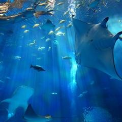 2連泊限定☆思い出づくりにピッタリ♪「沖縄美ら海水族館」入館チケット付(朝食バイキング付)
