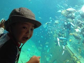 【遊】◆箱根園水族館入場券付・ファミリープラン!お子様にプレゼント付♪