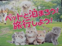 【ペットと泊まろう旅しよう】ワンちゃん・猫ちゃんと一緒に泊まろう! 広々30畳 限定1室