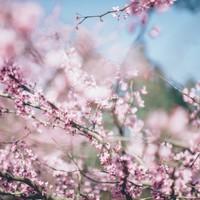 【3名様以上】グループ・家族旅行にお勧め!花に誘われ熱海温泉旅/夕・朝食付