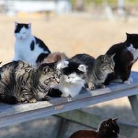 【猫の島(田代島)・網地島】マイカー向け2島周遊プラン