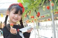 【季節のフルーツ狩り】白根グレープガーデン「季節のフルーツ狩りを堪能!」+選べる夕食付(2食付)