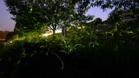 【先着順】客室のテラスから望む蛍を独占。☆心を癒す隠れ宿☆ホタル観賞プラン☆ワンドリンク付(W56)