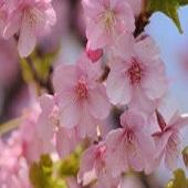 【日曜限定!】カップル・ファミリープラン!〜素泊まり〜【春のプチ旅行】
