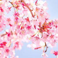 【ザ・セレクトン松本】2020年3月グランドオープン特別記念!素泊まりプラン♪【期間限定】
