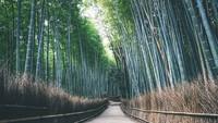 嵐電に乗って嵯峨・嵐山(竹林の小径)へ行こう!【バス・嵐電1日乗車券】付きプラン(素泊まり)