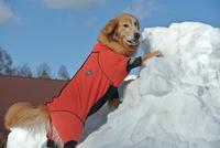 「冬の特別プラン!!山中湖でワンちゃんと楽しみましょう!!!」
