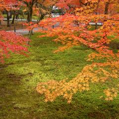【市バスチケット付き】紅葉の美しい京都へ★人気の寺院にもアクセス良好!みやび会席