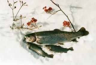 【2食付き】富良野を楽しむプラン♪ファミリーお子様添い寝無料。GW観光、スキーに、お先でスノ。