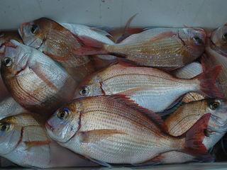 ◆特選船長おすすめ海鮮プラン!何の姿盛りかはお楽しみ◆自船・栄帆丸で釣ったお魚がメインになります♪
