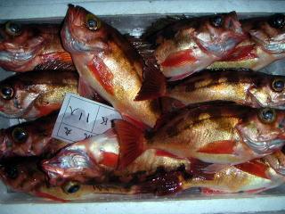 新鮮ぴちぴち!◆自船・栄帆丸直送!船長とくとく天然地魚プラン