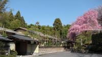 【2食付】 『筍亭』 工夫を凝らした京筍料理と美しい天鏡院庭園 ※桂川駅から送迎付