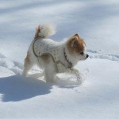゜* 真っ白な雪原でワンちゃん大喜び *゜ 広々ドッグランで雪遊び♪ペット宿泊無料!【1泊2食】