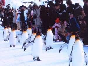 【冬の動物園を楽しもう!】旭山動物園入園チケット+おみやげ付♪ファミリープラン 素泊