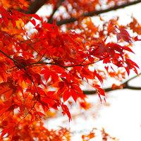 【紅葉プラン】滑床の散策・紅葉露天風呂…★自然の中で秋を感じる旅。フレンチコース<スタンダード>