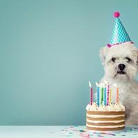 愛犬の記念日を一緒にお祝い Dog Anniversary Stay(朝食付)
