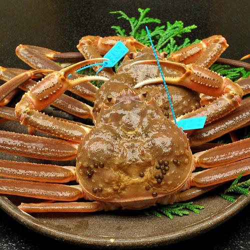 冬の石川で本物のずわい蟹を食す♪タグ付き加能ガニ★