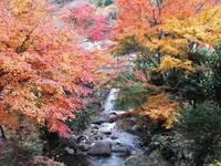 【もみじ祭り】冬の紅葉で心を温める  夕・朝バイキング&飲み放題プラン