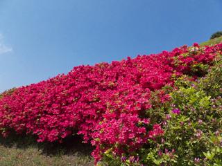 【4.5月】春到来!姫の沢公園で春のお花を満喫しよう♪【1泊2食付き】