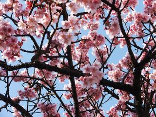 【1.2.3月は】少し早めのお花見満喫プラン♪【熱海でお花見】