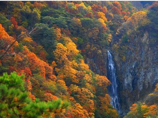 【秋の紅葉を満喫】飲み放題付き1泊2食バイキングプラン