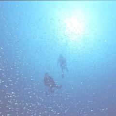 【体験ダイビング】魚と泳ぐ休日 自然を感じる旅をしませんか?フレンチディナーと貸し切り温泉露天風呂