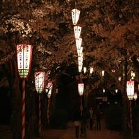 【春まつり】倉吉♪打吹公園春祭りへ♪無料送迎★1泊2日:イタリアン鍋