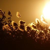 【絶景の秋旅へ♪】平日限定!黄金色に輝くススキ大海原!稲取細野高原入山チケット&送迎付きプラン