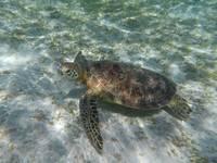 【マリンプラン】宮古島の海を満喫♪ウミガメシュノーケルツアー付き♪素泊まりスタンダードタイプ♪