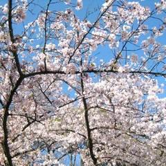 【*お花見*】しまなみの春を満喫☆ぽかぽか日差しと桜舞う島散策♪<夕定食>