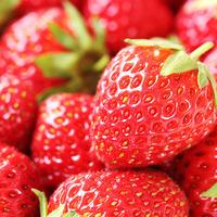 【40分イチゴ食べ放題】イチゴ狩り体験付き☆湯布院フレンチ☆プラン