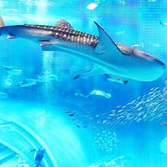 【リーズナブル】ゆった〜り連泊ステイで!最大25%OFF!美ら海水族館も近いょ♪