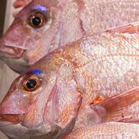 【鯛しゃぶプラス】旨みたっぷり篠島の鯛をさっぱり上品に☆鯛しゃぶと海鮮料理[1泊2食付]