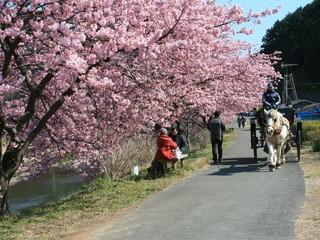2月スタートのプラン!桜咲く 早春の伊豆に遊びに行こう!4名以上なら1人1泊3800円