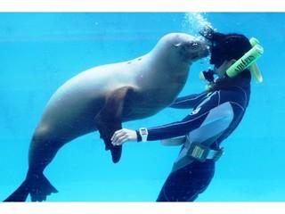 【朝食付き】イルカ、アザラシ、ペンギンと遊べる♪『下田海中水族館』入園券付きプラン