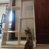 【猫・小動物】別館の禁煙特別室で通常ディナープラン【ペットと一緒】