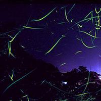 【蛍】期間限定★ホタルの里まで送迎無料の特典付!暗闇の漂う明かりをうっとり蛍鑑賞♪【竹コース】