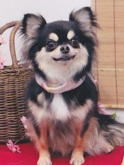 ■小型犬1頭連れ限定■年末年始¥30000(2人+小型1頭込)◆飛騨牛リブロースステーキ+貸切温泉