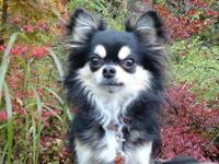 犬と泊る:【飛騨牛堪能】【現地カード決済5%還元15200〜】サーロイン100g+鮎+岩魚+貸切温泉