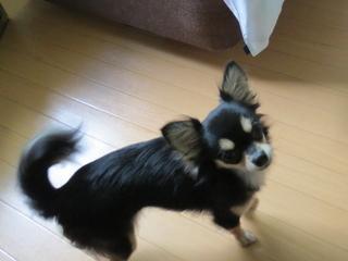 ■小型犬1頭(無料)連れ限定コンパクトプラン12000円■飛騨牛リブロース100g+貸切(無料)温泉