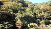 【紅葉巡り】秋の真庭に紅葉を見に行こう!〔1泊2食付〕特典付き