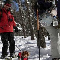 ★☆わんわんスノーハイクプラン★☆霧ヶ峰山中でワンちゃんと雪道をお散歩しよう!(1泊2食)