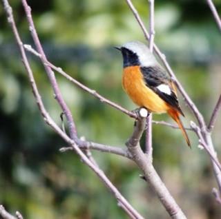 【バードウォッチング】国内有数の野鳥の宝庫、戸隠高原バードウォッチングプラン【1泊2食付】