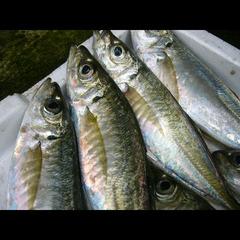 【安心価格】旬の獲れたて海鮮を味わう♪ 現金特価