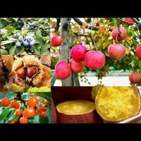 ≪フルーツ狩り≫果物好き必見!!マキノピックランドへレッツゴー♪【1泊2食付】