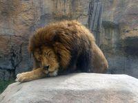 【旭川を満喫♪】夏休みおすすめ☆ 『素泊まり』旭山動物園入園券と梅光軒ラーメン券がプランに含まれます