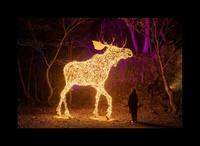 【十和田湖※光の冬物語日程ご予約承り中】超人気イベントで盛り上がろう【和牛&鮑ダブル炉端焼き】